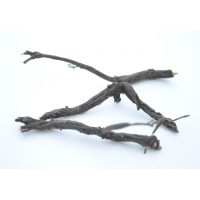 Лапчатка белая - пятипал - Potentilla alba